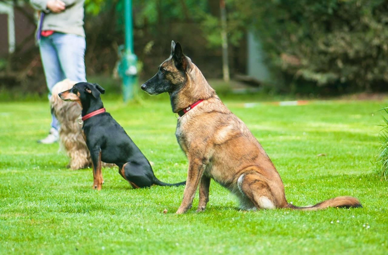 Как научить собаку команде фу, обучение щенка команде фу пошагово - dogtricks.ru