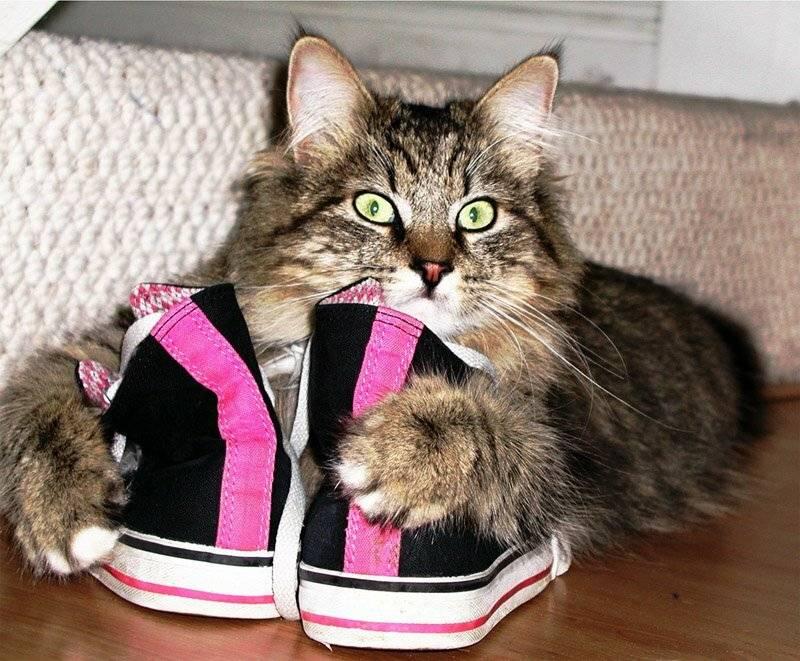 5 моделей поведения кошки, предупреждающих о негативе в доме