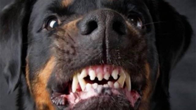 Какие косточки разрешено давать взрослой собаке: с какого возраста дают щенку