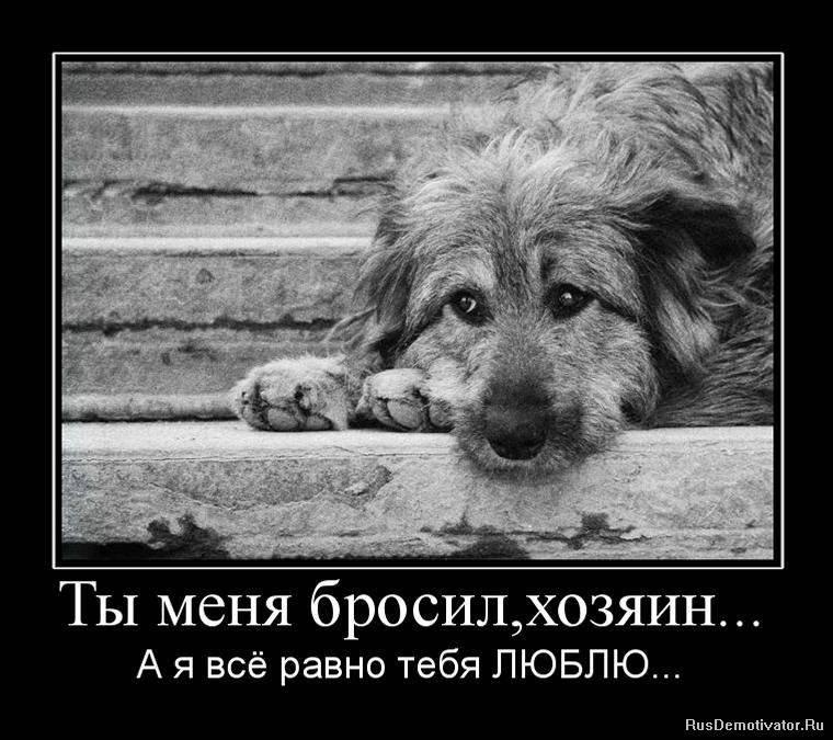 10 причин, почему собаки - лучшие друзья человека