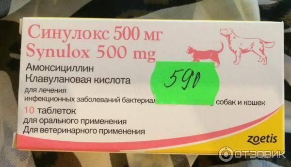 Синулокс для собак: инструкция по применению в ветеринарии, цена, отзывы