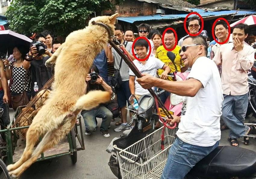 Почему кот нюхает нос человека. зачем китайцы нюхают котов: чем опасно и как это правильно делать