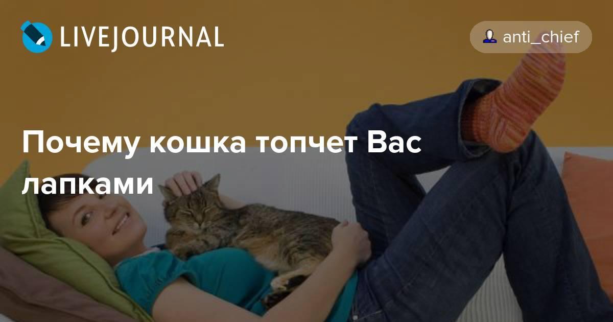 Почему кошки не любят, когда их трогают за задние и передние лапы