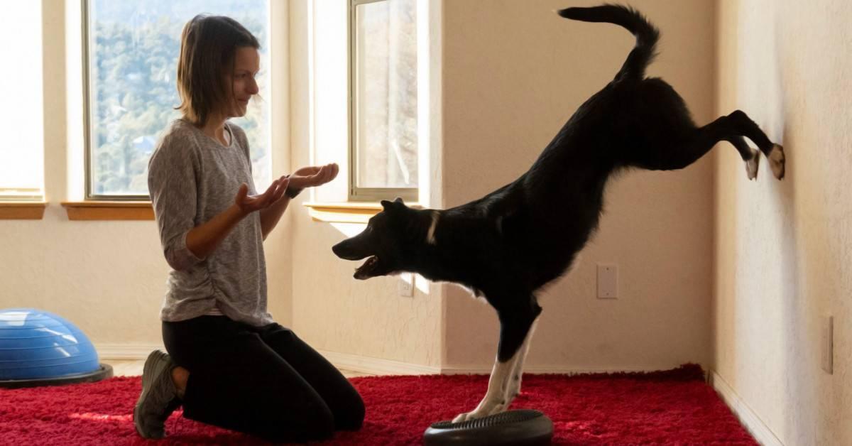 Инженеры придумали жилет с вибрацией для дрессировки собак ► последние новости