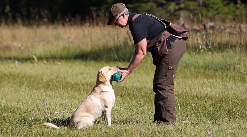 Как отучить собаку прыгать на хозяина как отучить собаку прыгать на хозяина