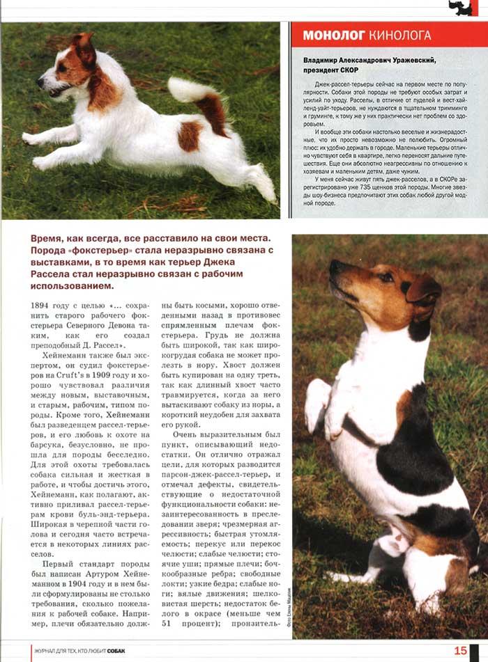 Джек рассел терьер: фото щенков, внешность, характер, уход, дрессировка