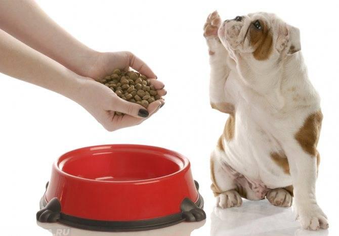 Почему у собаки урчит в животе и что делать