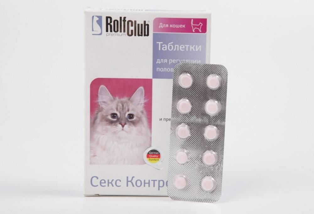 Контрацептивы для кошек: обзор противозачаточных препаратов, показания к применению