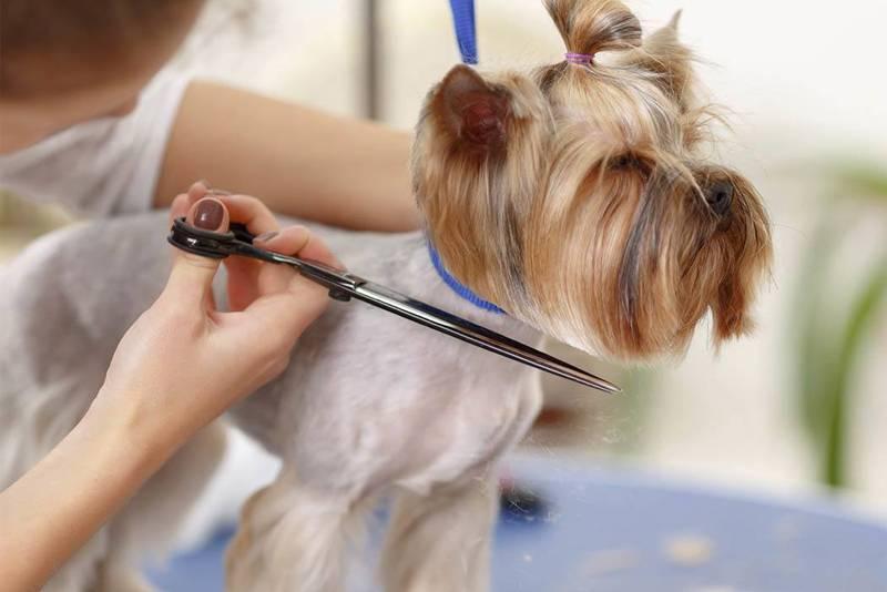 Как подстричь злую собаку в домашних условиях | стрижка агрессивных собак