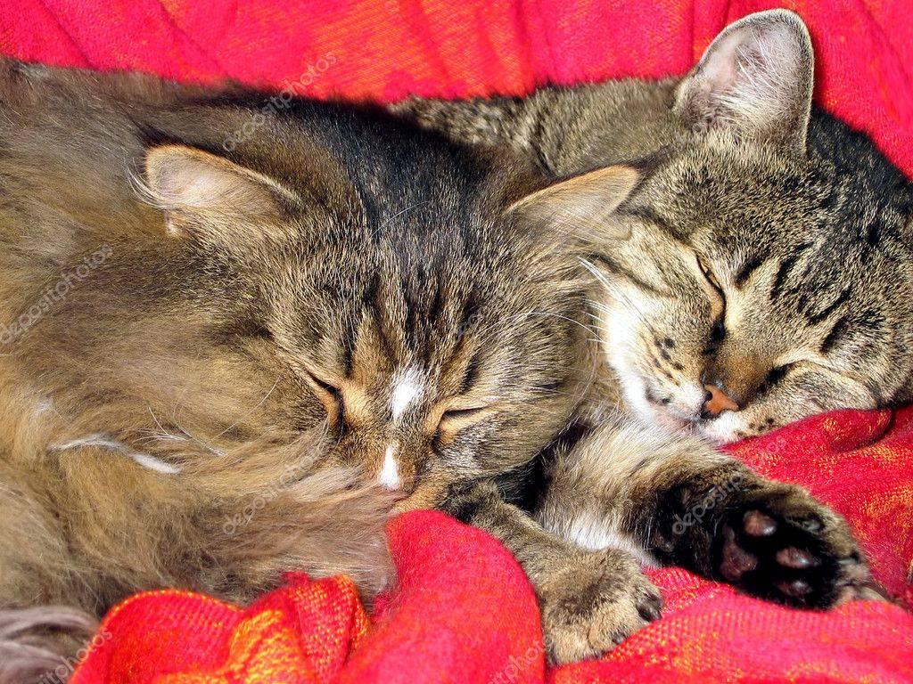 К чему снятся кошки: варианты трактовки сна от самых известных толкователей