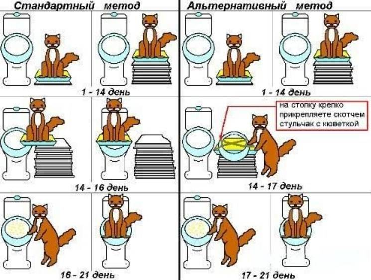 Как часто кот должен ходить в туалет по большому и по-маленькому?