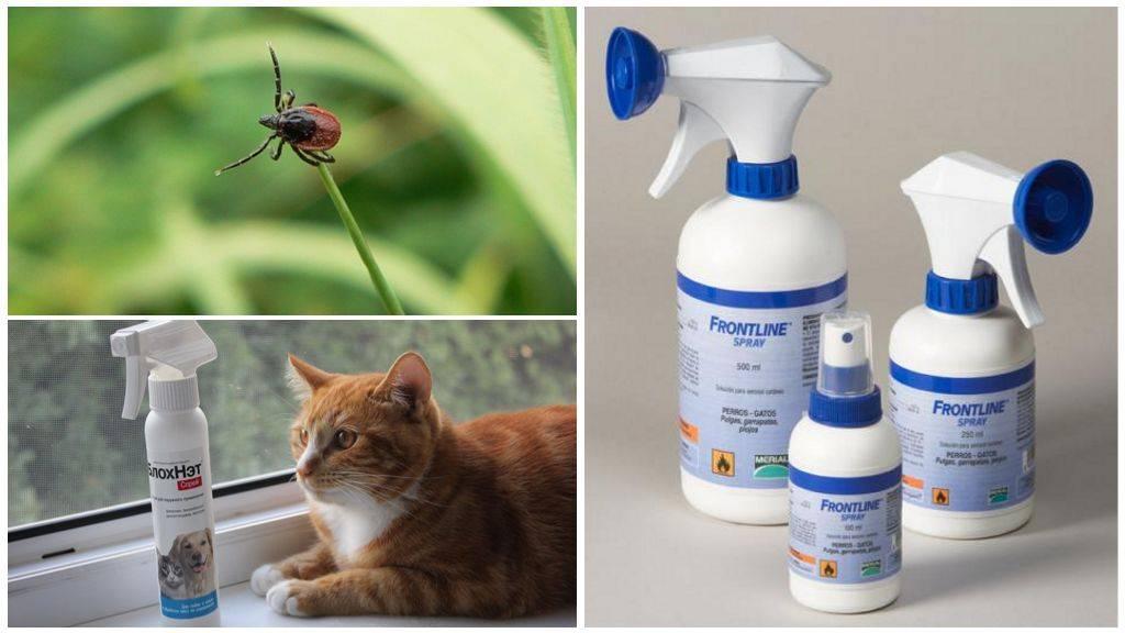 Спрей от блох у кошек: эффективность и простота в одном флаконе