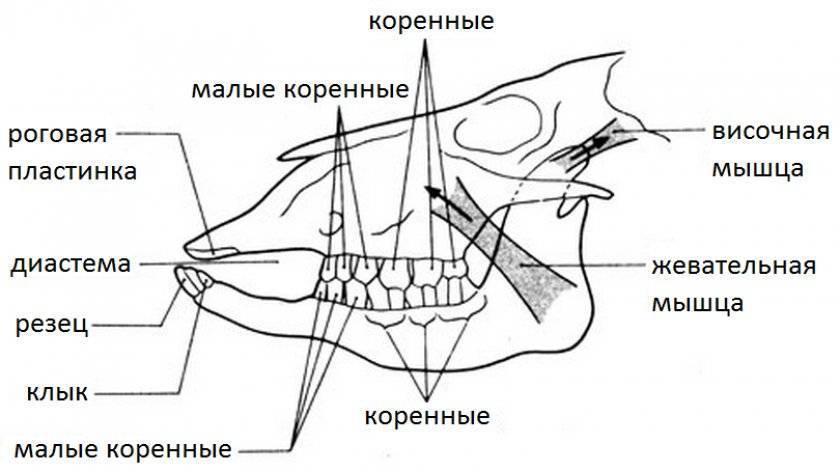 Остеомиелит челюсти: причины, симптомы и лечение