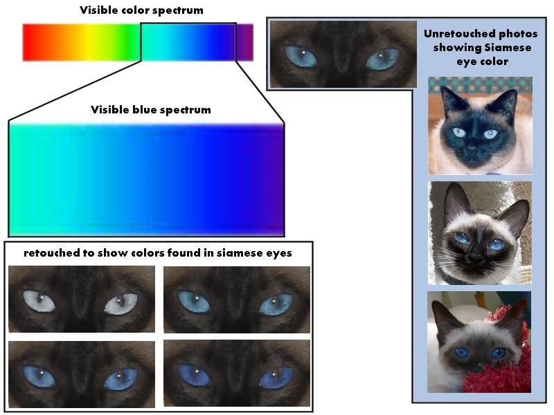Различают ли цвета кошки, какие и сколько, видят ли они ночью в темноте и почему?