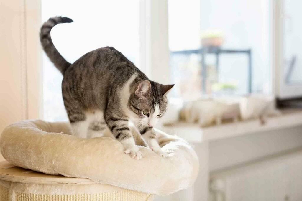 Кто ловит мышей и крыс лучше – коты или кошки и какой породы, охотятся ли кастрированные животные?