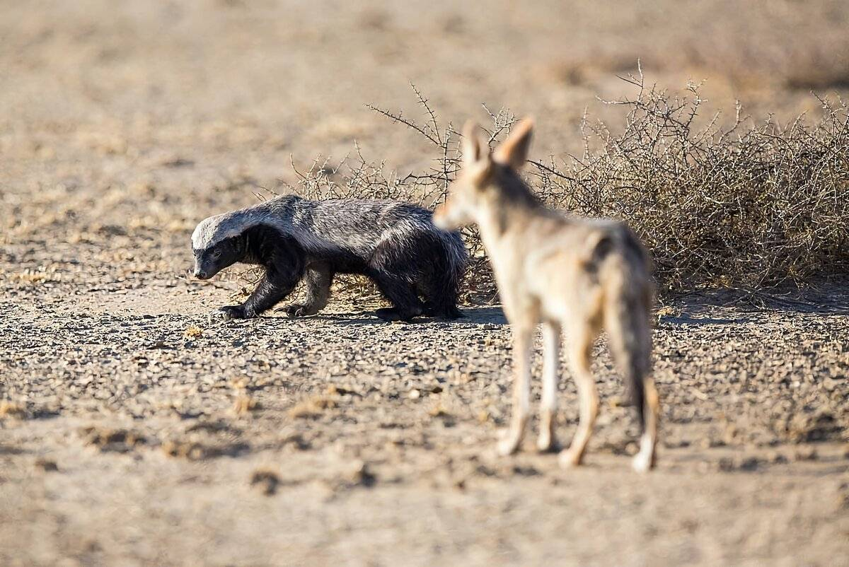 50 интересных фактов о хищных животных — общенет