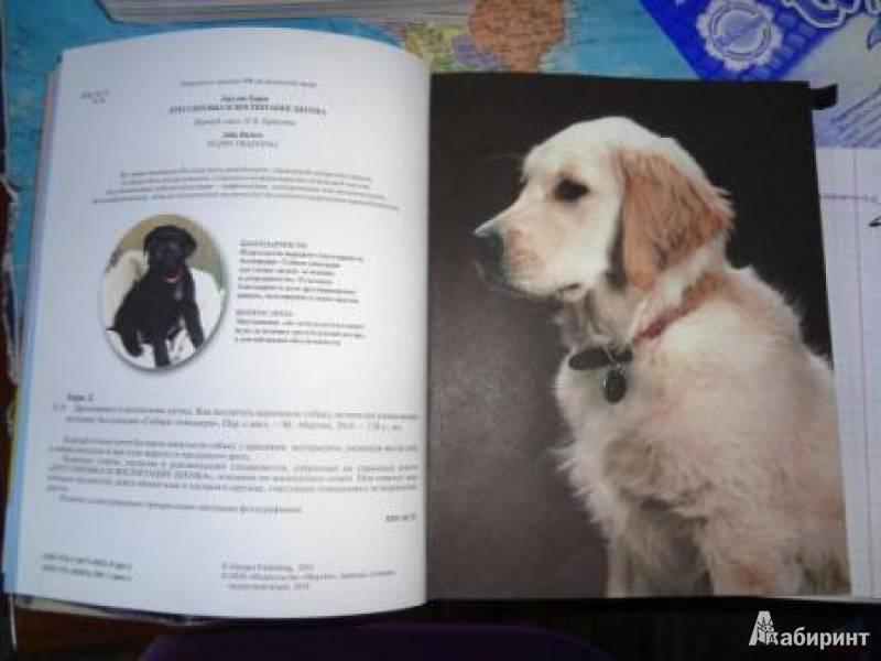 Воспитание собаки: правильный подход от начала и до конца