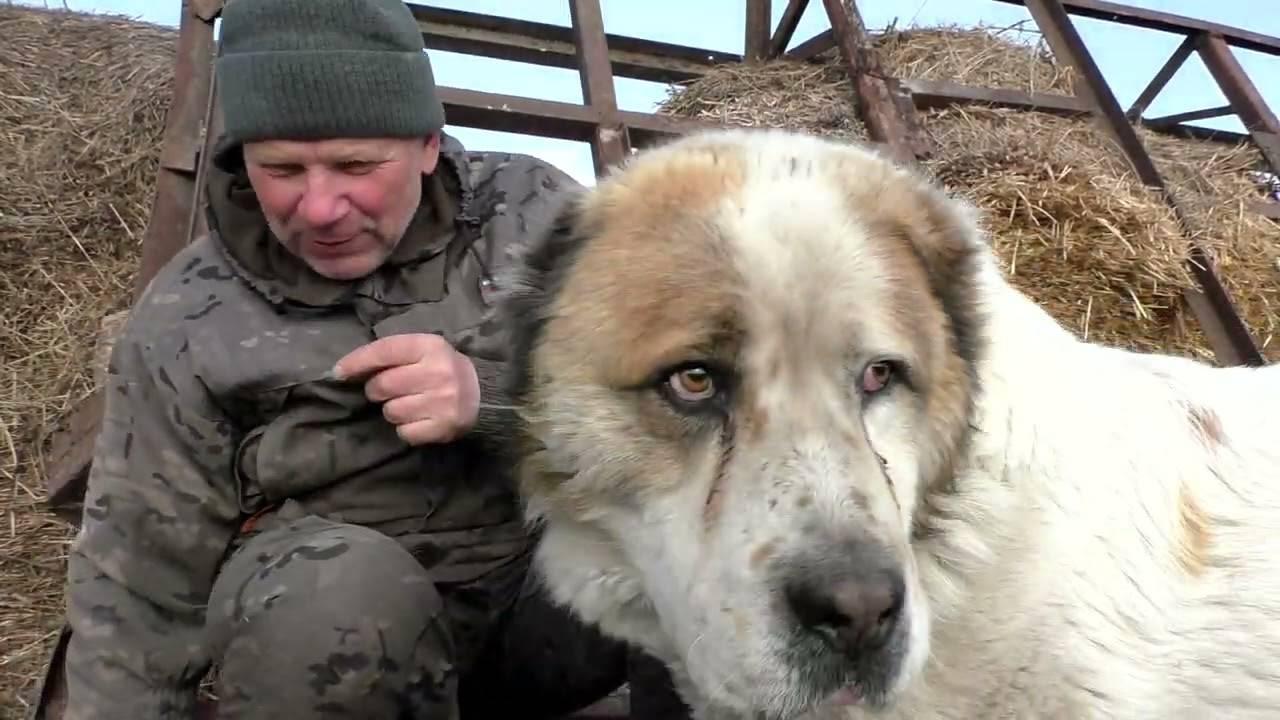 Собака укусила | милосердие.ru