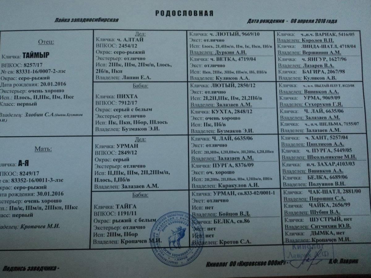 ᐉ клички для собак породы лайка: основные секреты выбора - ➡ motildazoo.ru