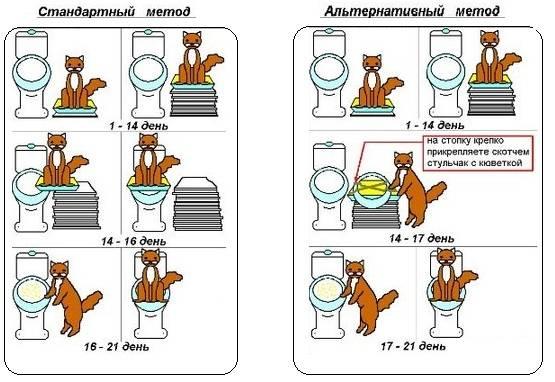 Способы приучения котенка к туалету