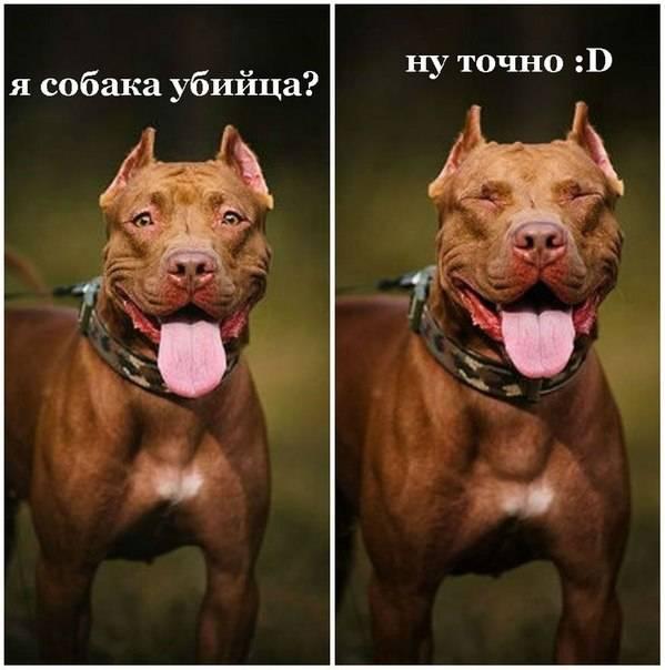 Какие запрещенные породы собак есть в россии: список