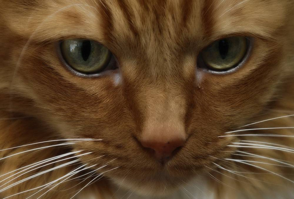 Сухой и горячий нос у кота: причины и что делать – как помочь кошке или котёнку