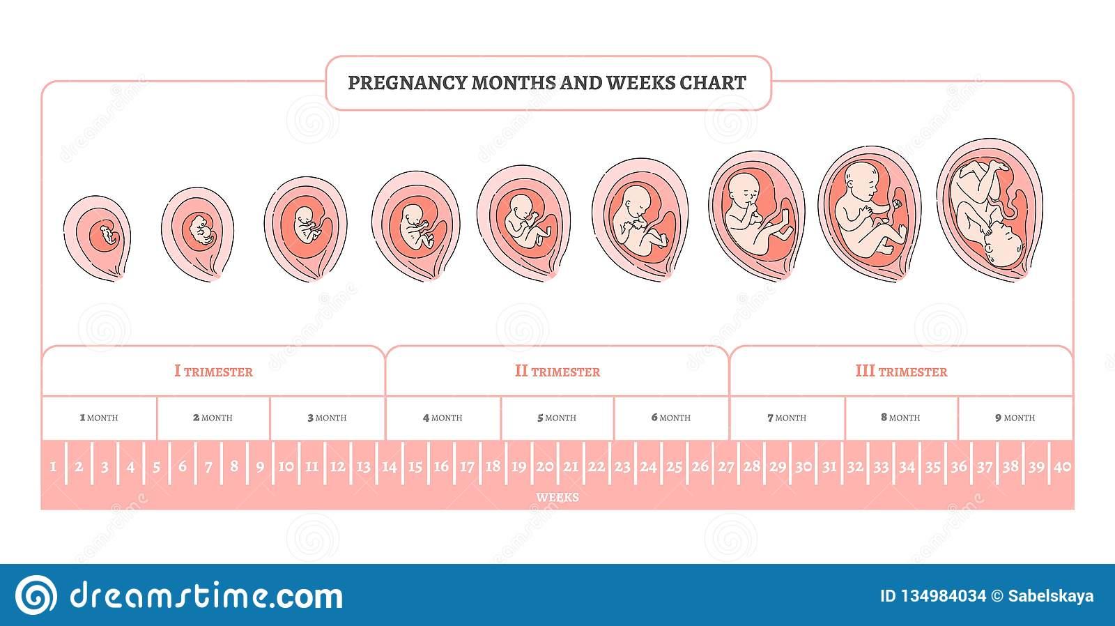 Беременность кошки по неделям: календарь