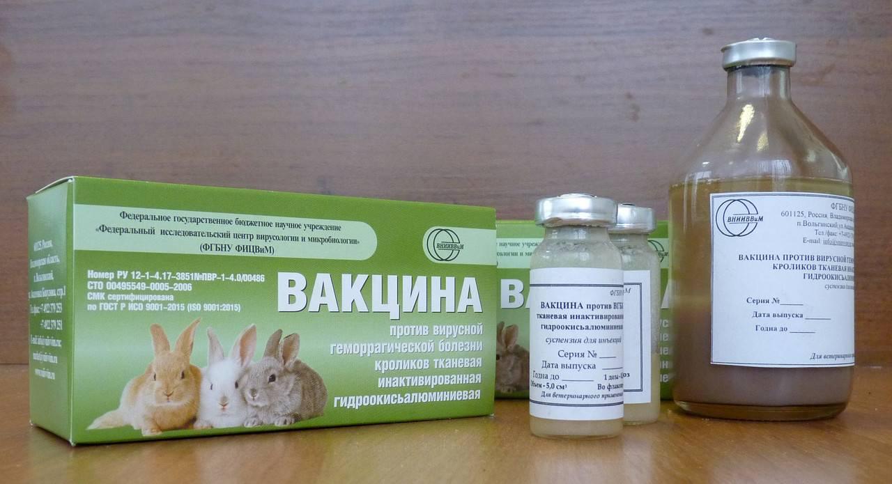 Использование ассоциированной вакцины для кроликов