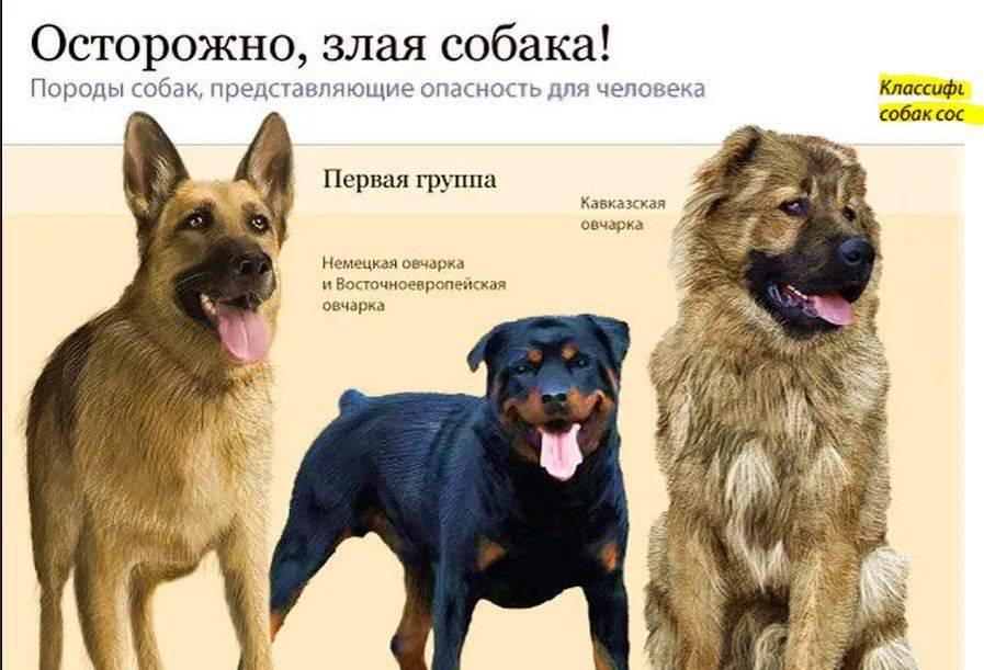 Искусственный отбор собак в племенное разведение