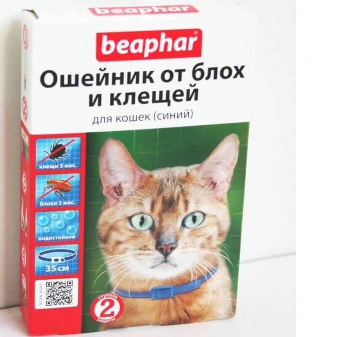 Обзор ошейников от блох для кошек и котят: как действует и какой выбрать