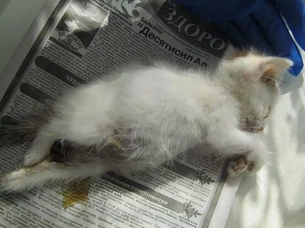 У кота болит лапа хромает, что делать если у кота болит задняя лапа