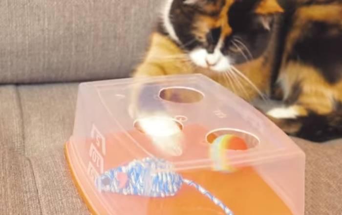 Смотреть лайфхаки что можно сделать для котов. лайфхаки для котиков: как сделать совместную жизнь легче и веселее