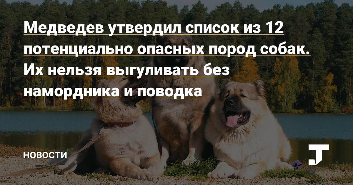 Правила выгула собак: закон в 2021 году, штраф, запрещенные места, можно ли гулять без намордника и поводка в городе