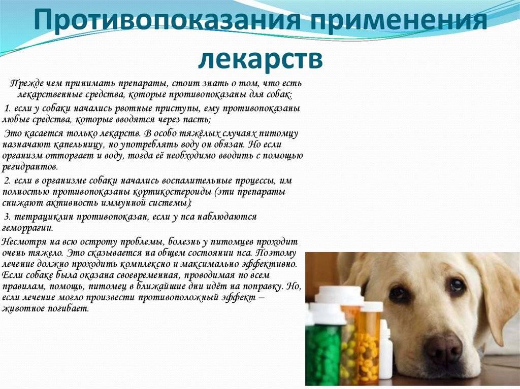 Заболевания желудочно-кишечного тракта у собак