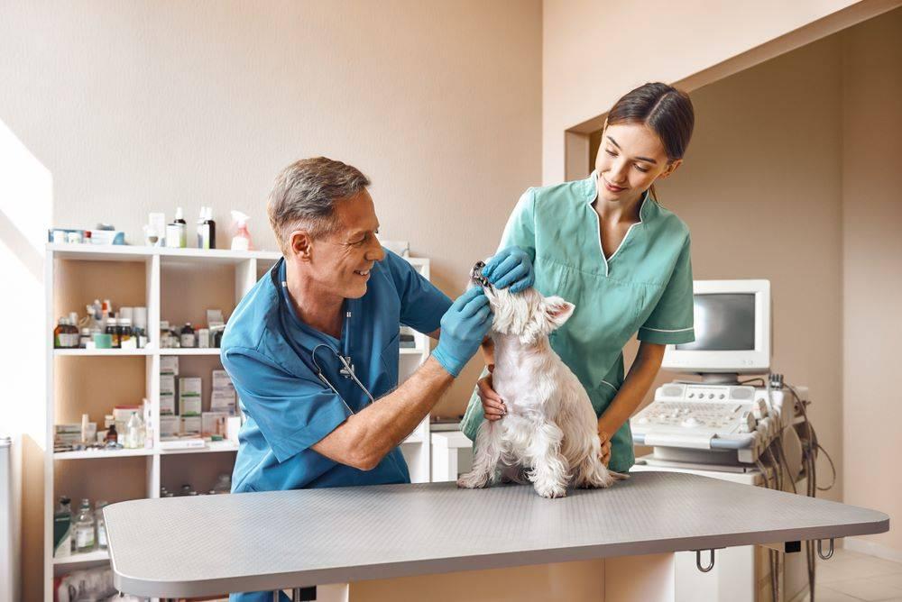 Ветеринарные клиники поддерживают девушек, которые хотят найти себя в науке