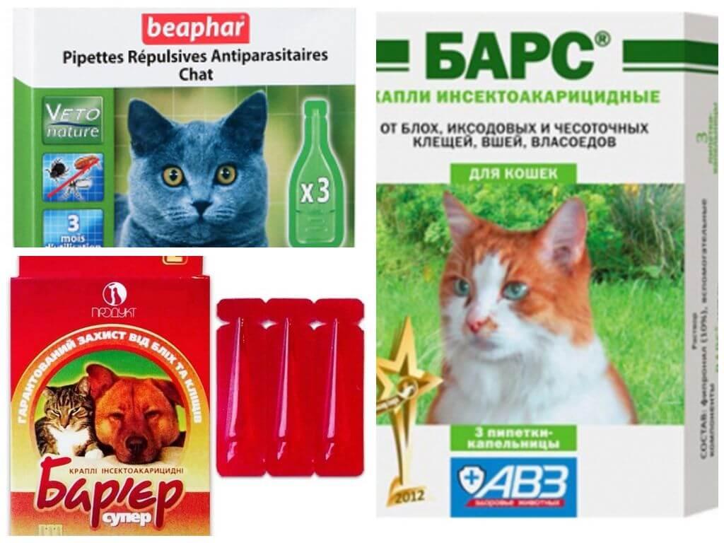 В помощь домашним животным: рейтинг лучших капель от блох для кошек 2020 года