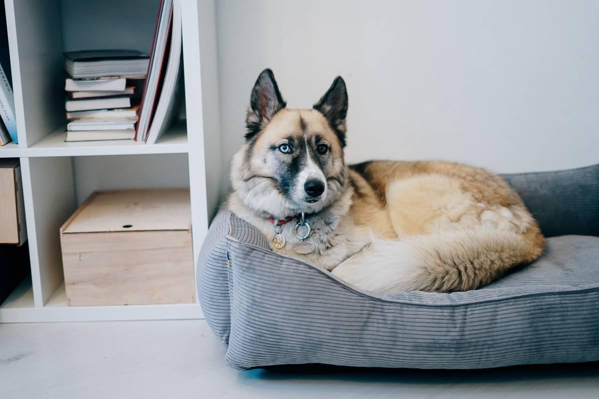 Как выбрать лежанку для собаки?