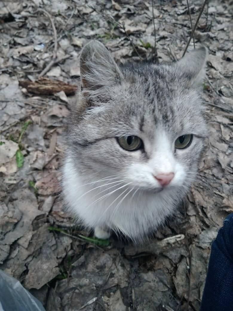 Беспородная домашняя кошка: простые советы по уходу - статьи