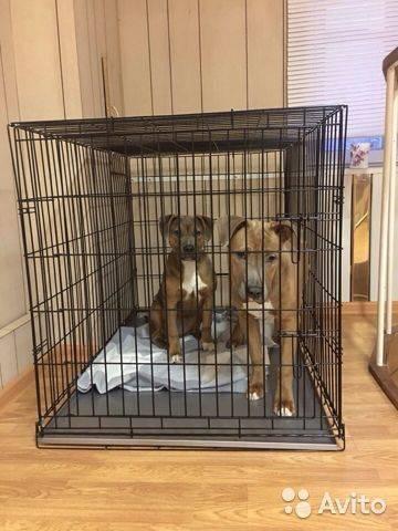 Вольер для собаки в квартире: как создать комфорт для питомца