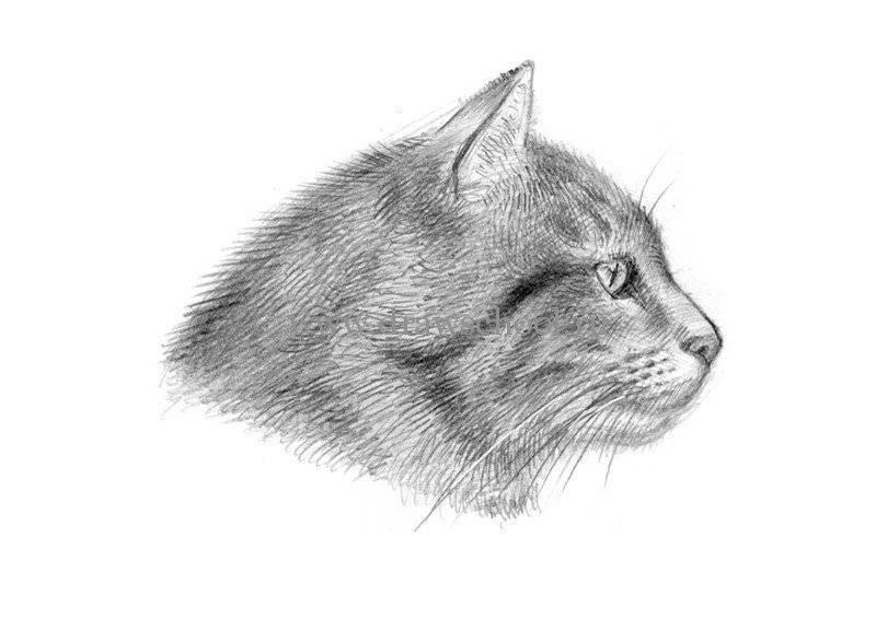 9 способов нарисовать милейших котиков