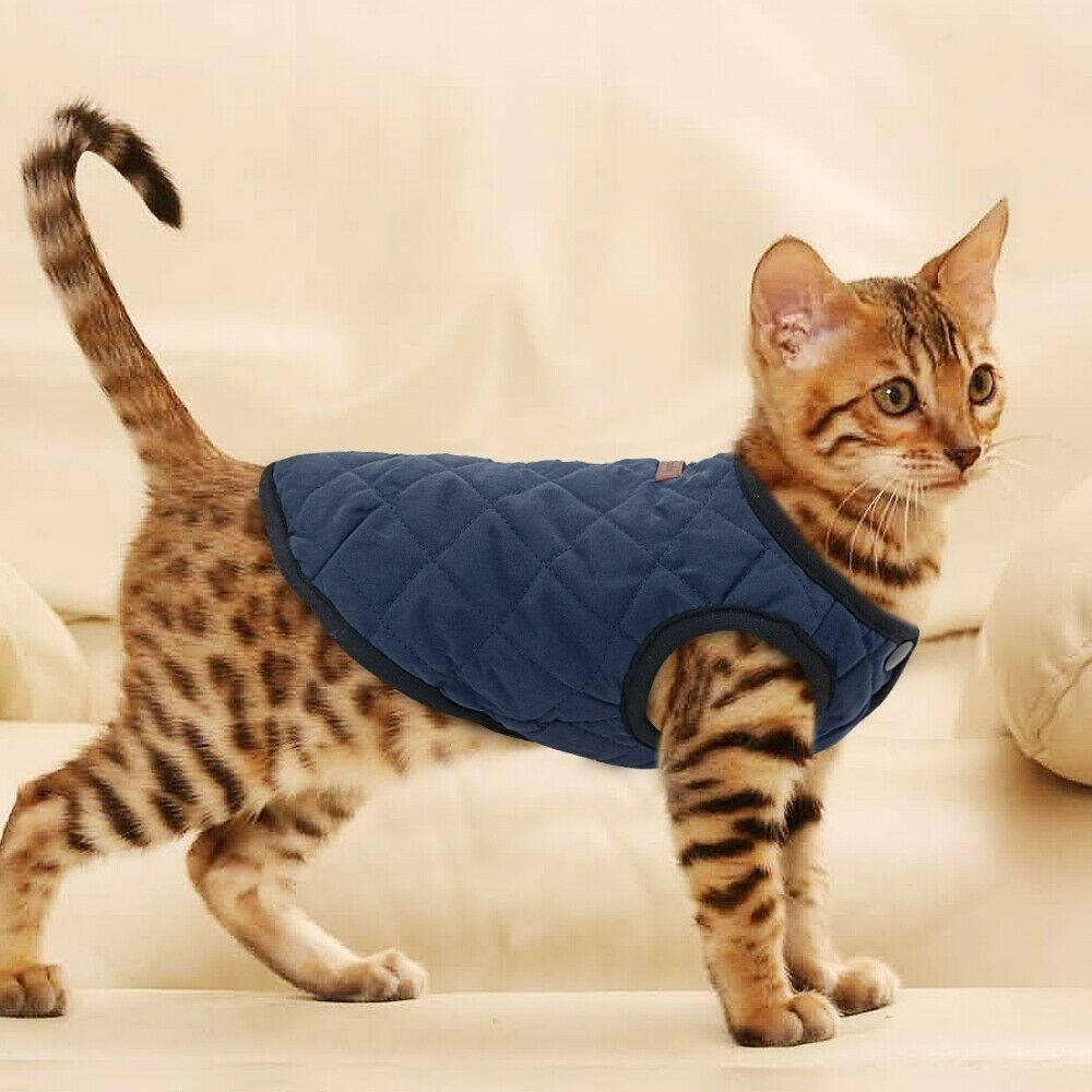 Обзор современной одежды для котов, ее изготовление своими руками и фото