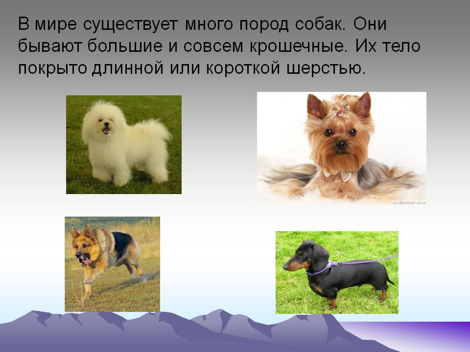 Маленькие породы собак: топ-20 с описанием и фото | dogkind.ru