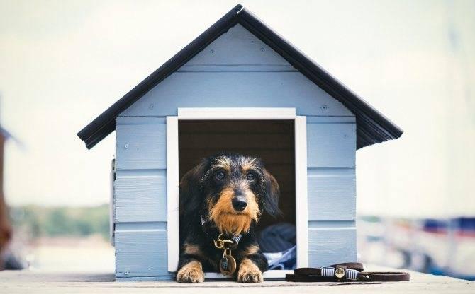 Как приучить собаку оставаться во дворе вашего дома без привязи