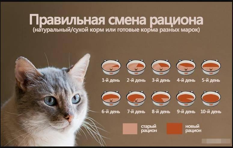 Как выкормить котенка без кошки в домашних условиях, рецепты смесей