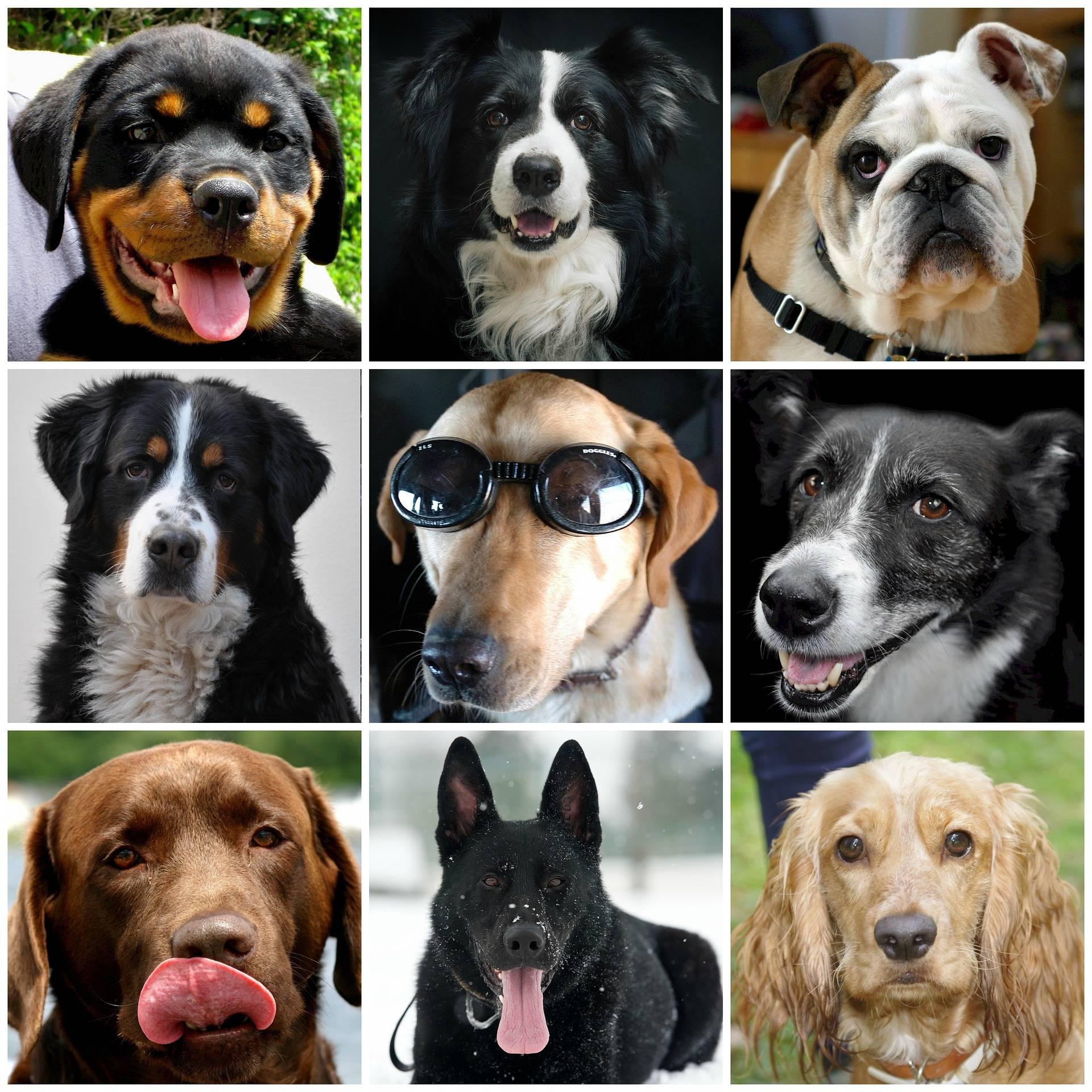 Добрые породы собак: топ-10 с фотографиями и названиями