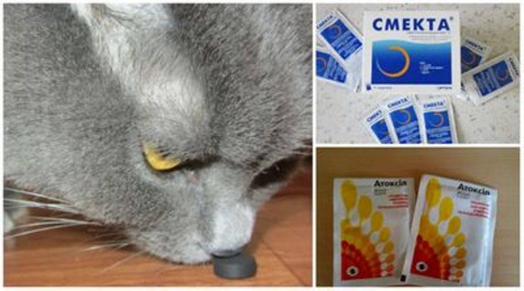 У котенка понос, что делать и как лечить?