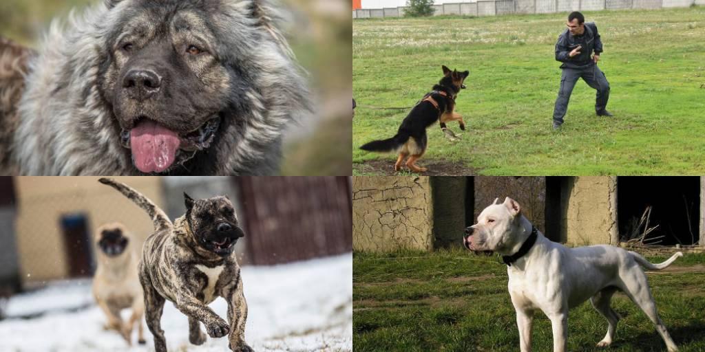 Запрещенные собаки в европе и америке