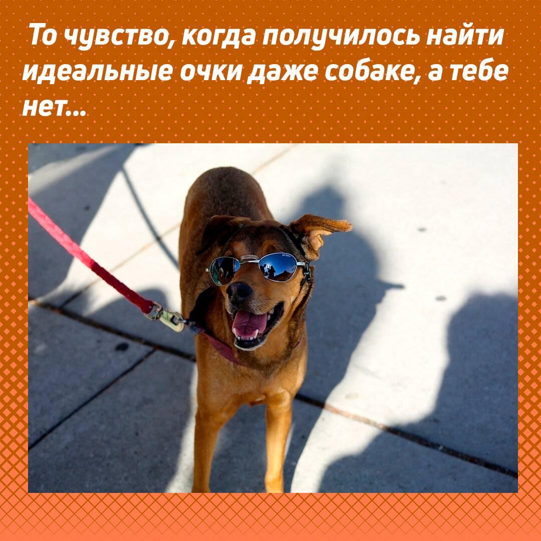 Как продлить жизнь своей собаке. 10 советов