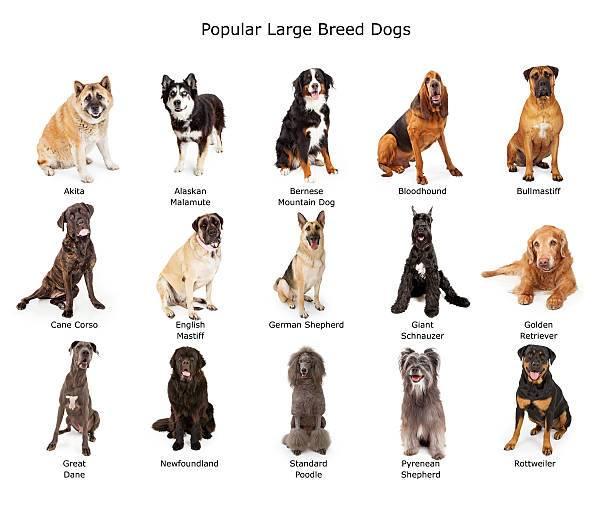 Собака дворняжка. краткое описание: выбрать дворняжку или собаку породистую