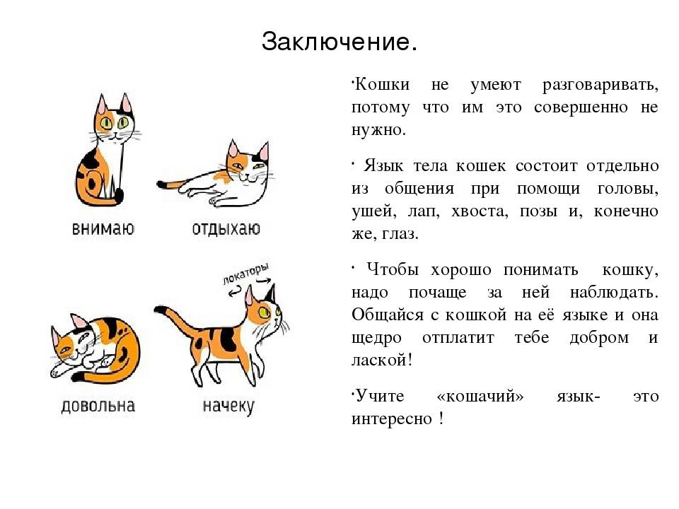 11 звуков, которые издают кошки и что они значат — сайт эксперта по животным